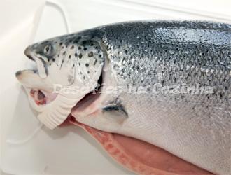 cabeça do salmão copy