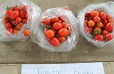 Tomates-Art copy