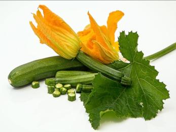 Courgette em flor.png